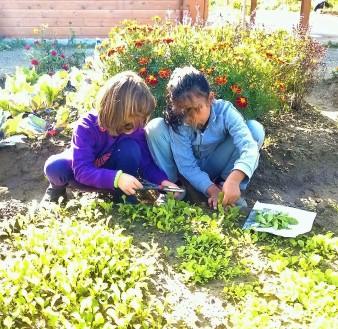 teaching veggie garden salad rucola orto didattico bambini ragazzi padova parco basso isonzo tagliare raccogliere insalata